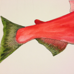 Sockeye (tail &amp; fin detail)